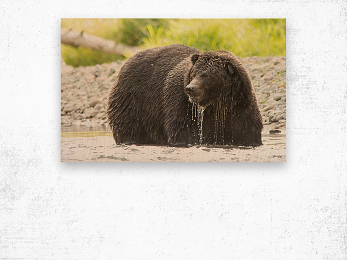 Very Wet Grizzily Wood print