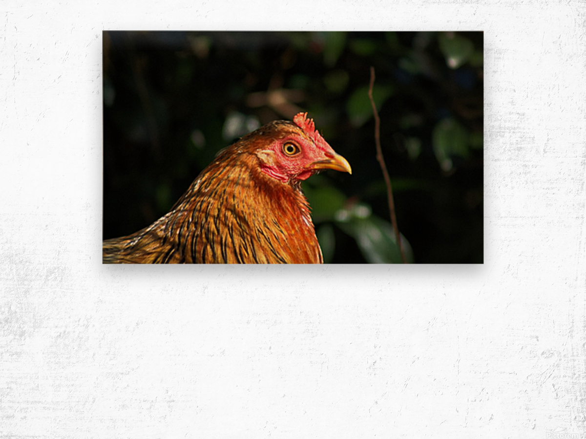 You Turkey Wood print