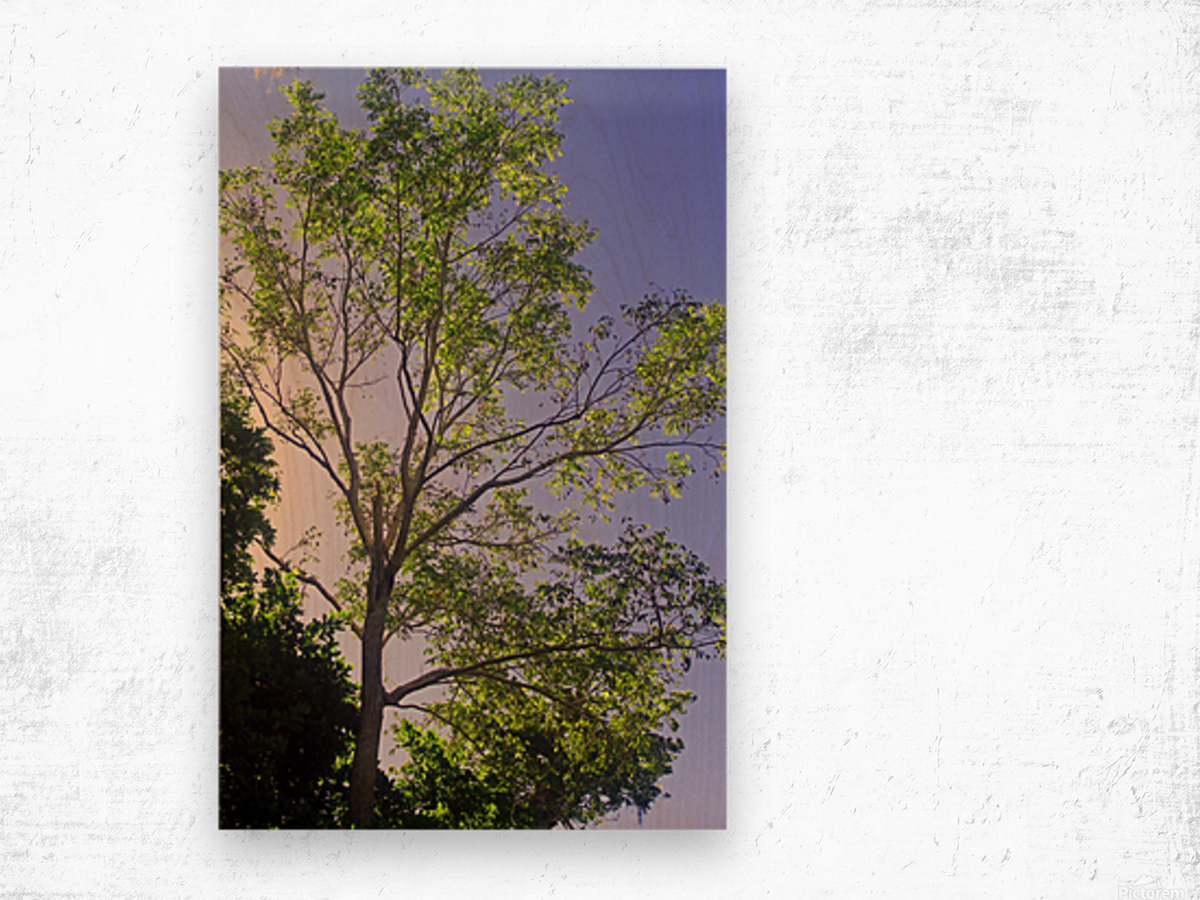 Touching the Sky Wood print