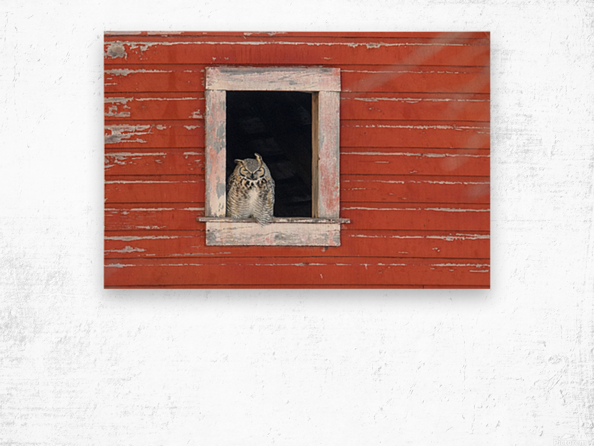 Great Horned Owl - Red Barn Wood print