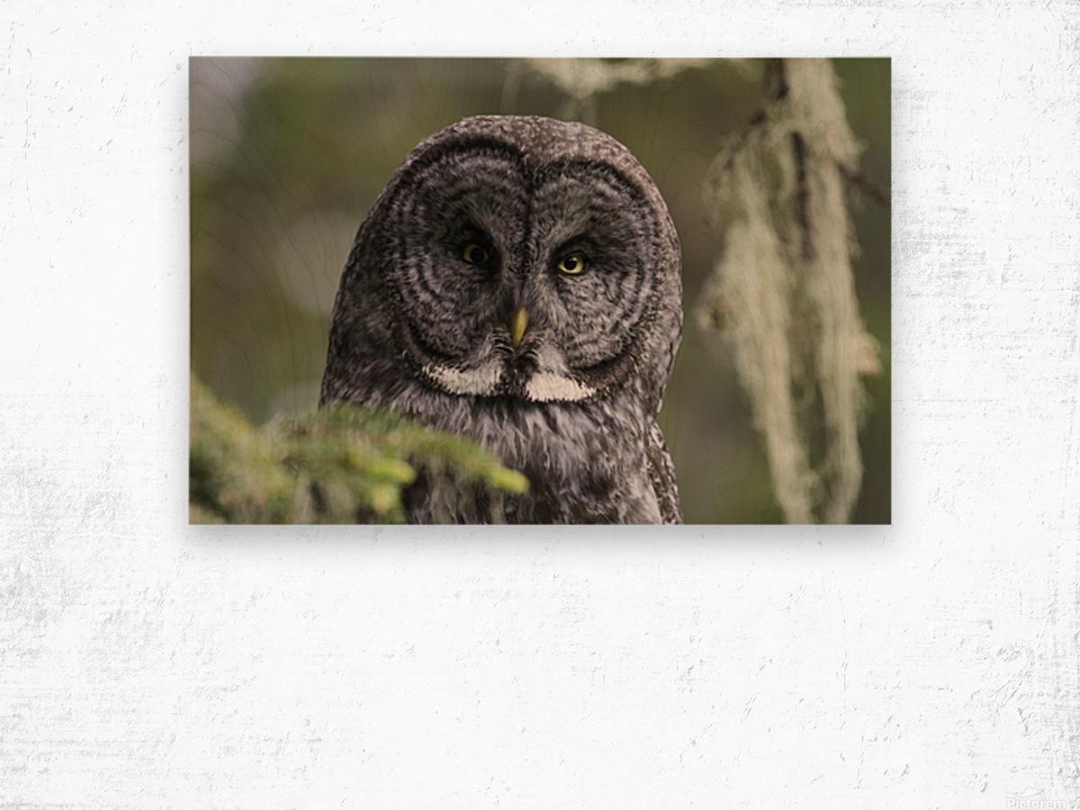 Great Grey Owl - Eye to Eye Wood print