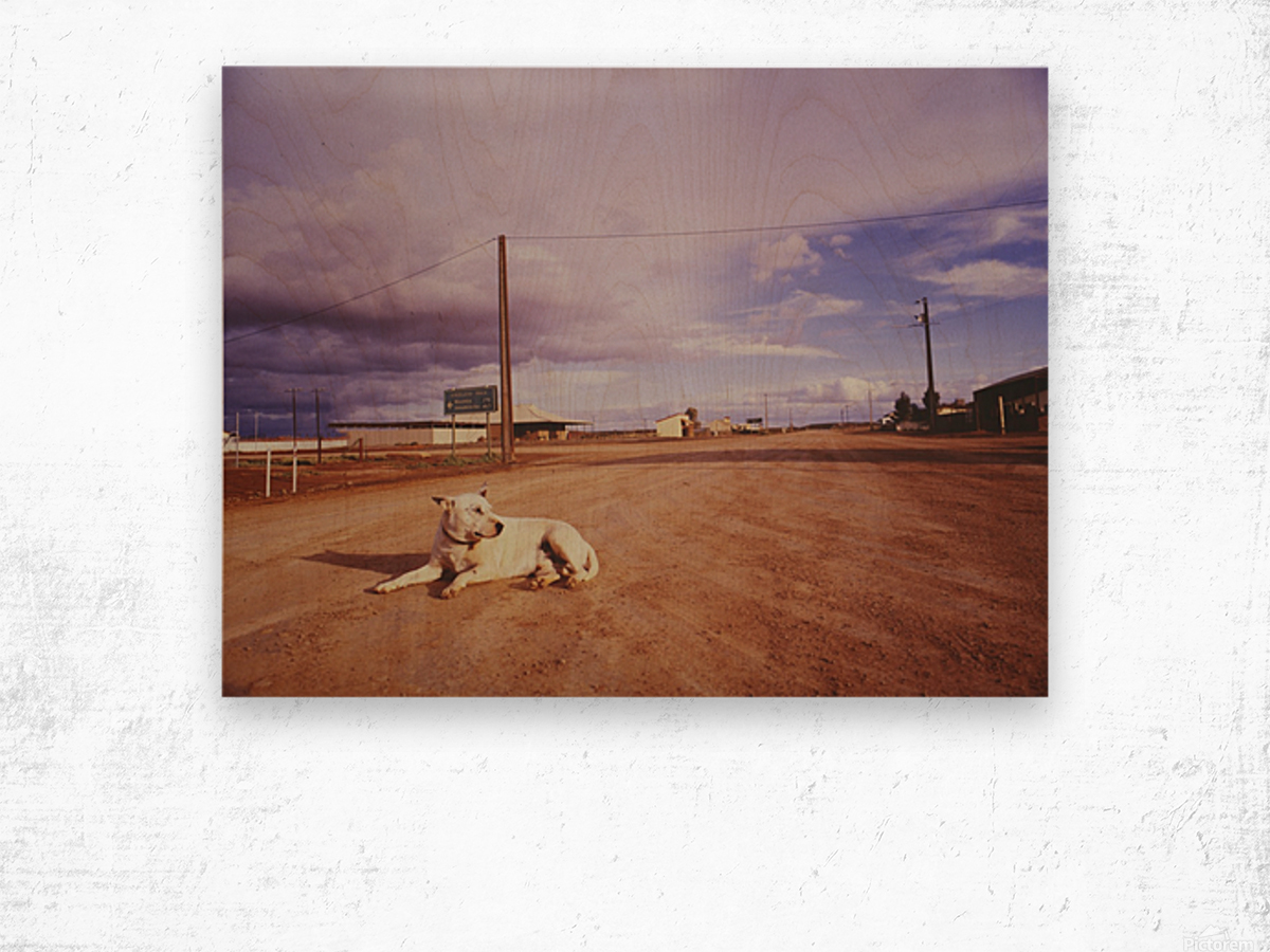 Lone dog in Outback town Australia Wood print