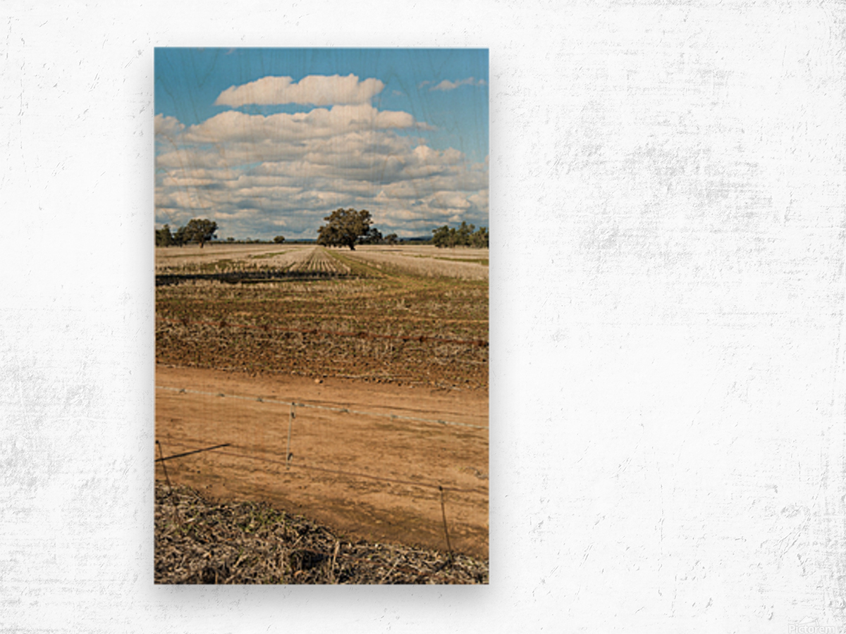Stubble fields post harvest against blue sky and clouds. Wood print