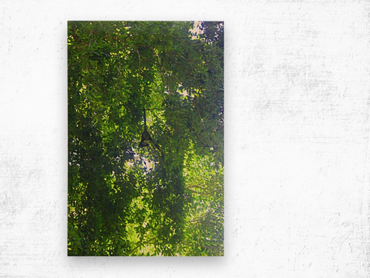 Just Hanging Around Wood print