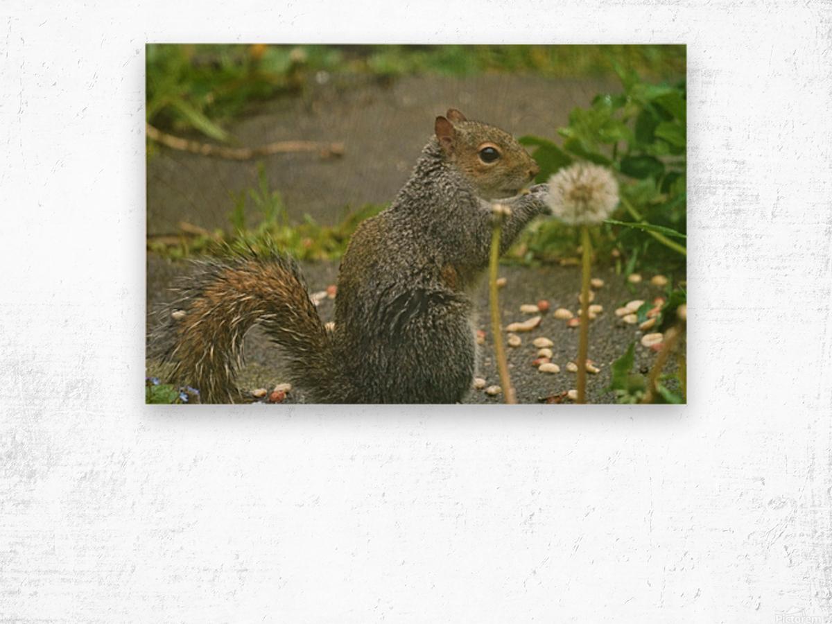 Squirrel paw warming Impression sur bois