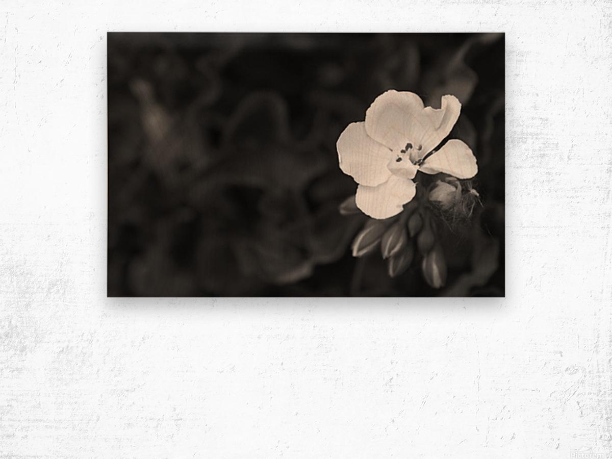 Blooming side flower B&W Wood print
