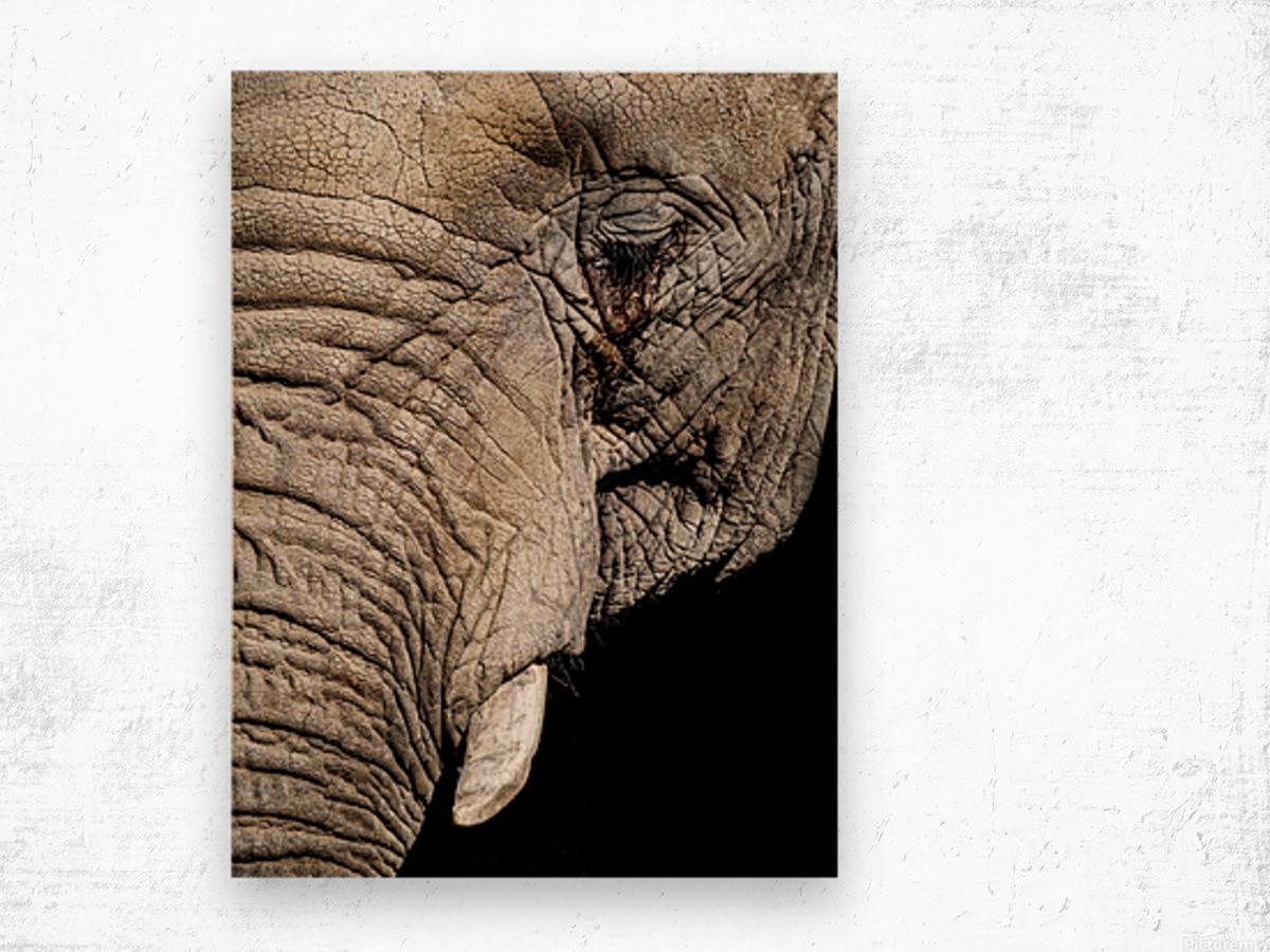 Elephant Close Up Impression sur bois