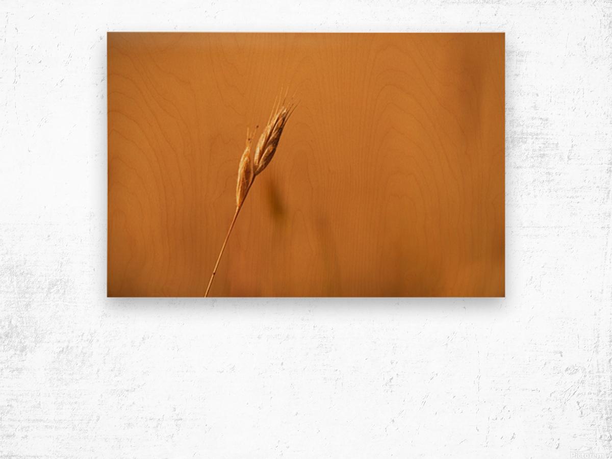 Golden Hour Grass Wood print
