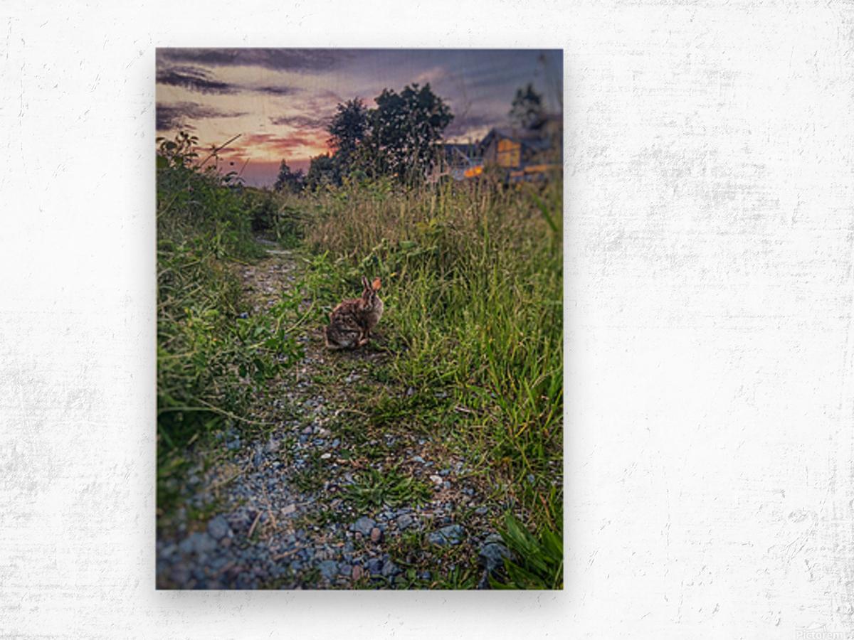 Sunset bunny Wood print