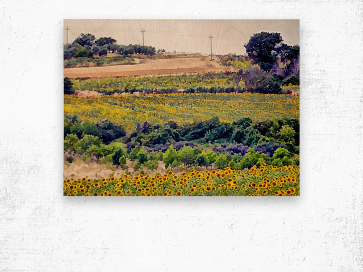 Sunflower Landscape Wood print