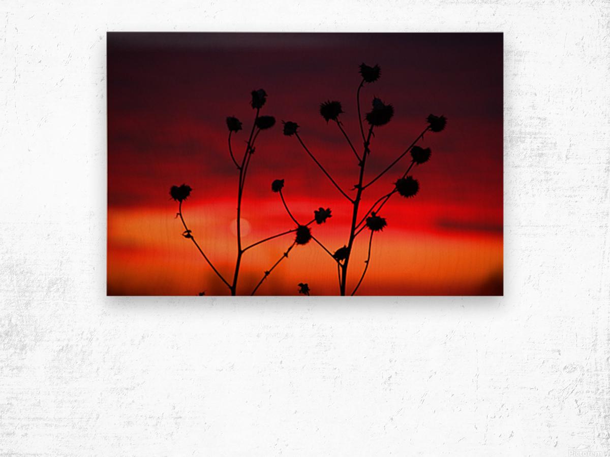 Liberty Sunset Wood print