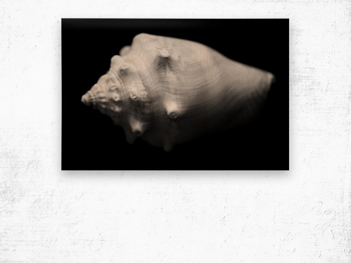 Series of shells Wood print