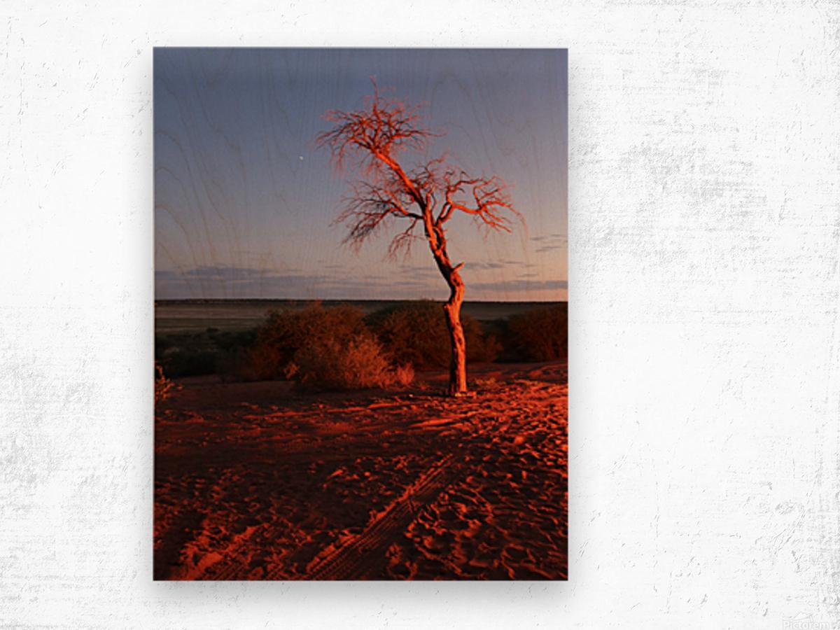 AdriaanPrinsloo 7215 Wood print