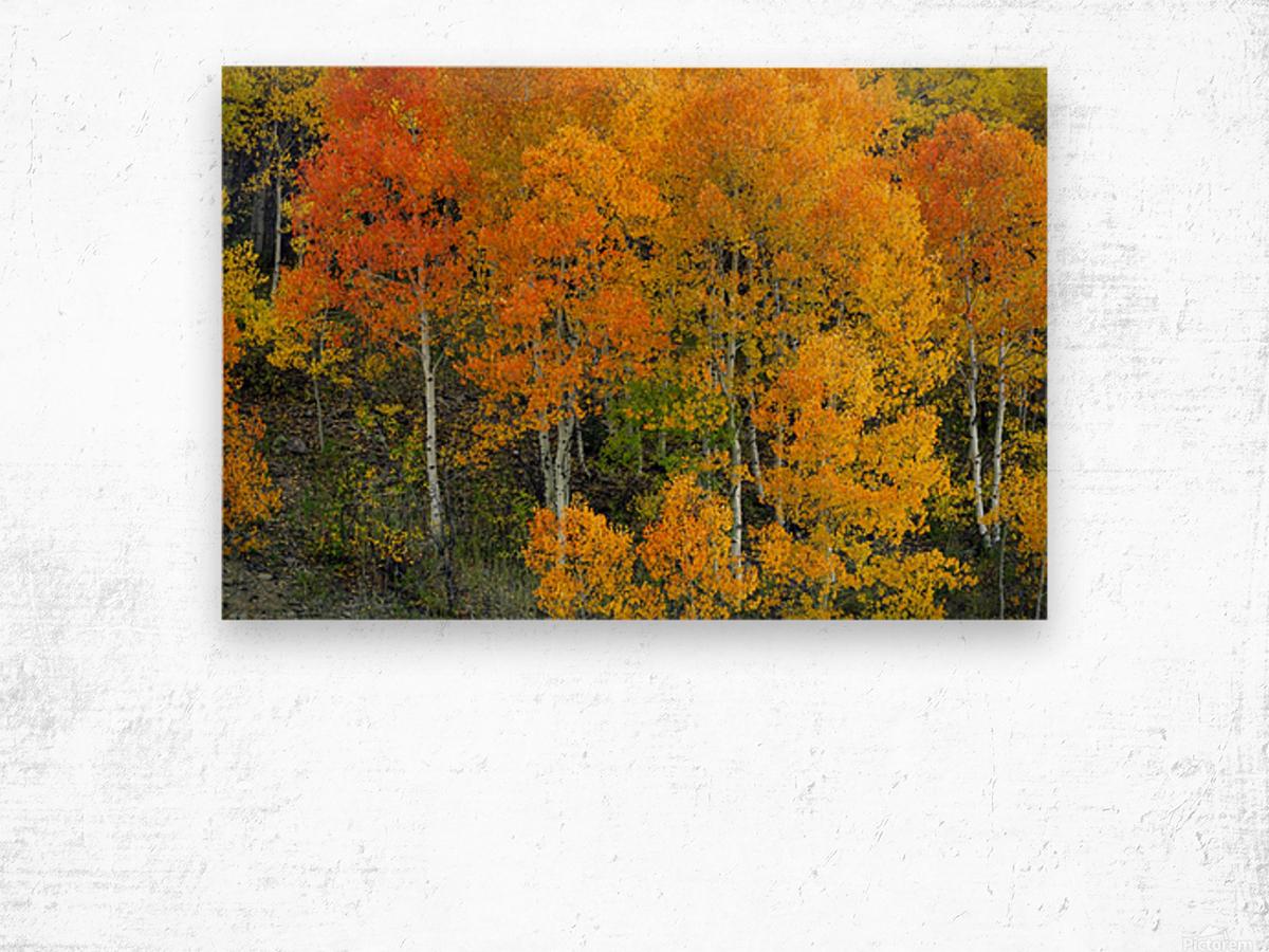AUTUMN SERENITY  Wood print