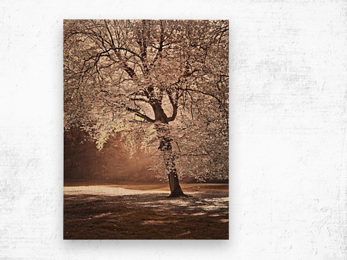 Autumn tree in sunlight Wood print