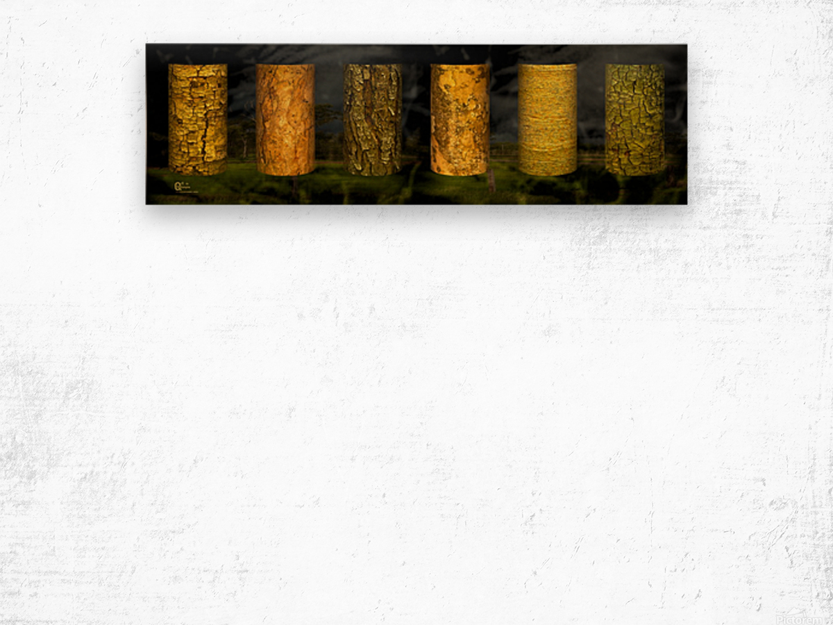 tree bark sentinels Wood print