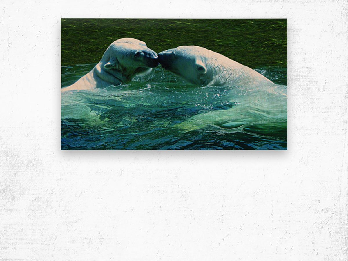 Kiss Me Polar Bears Wood print