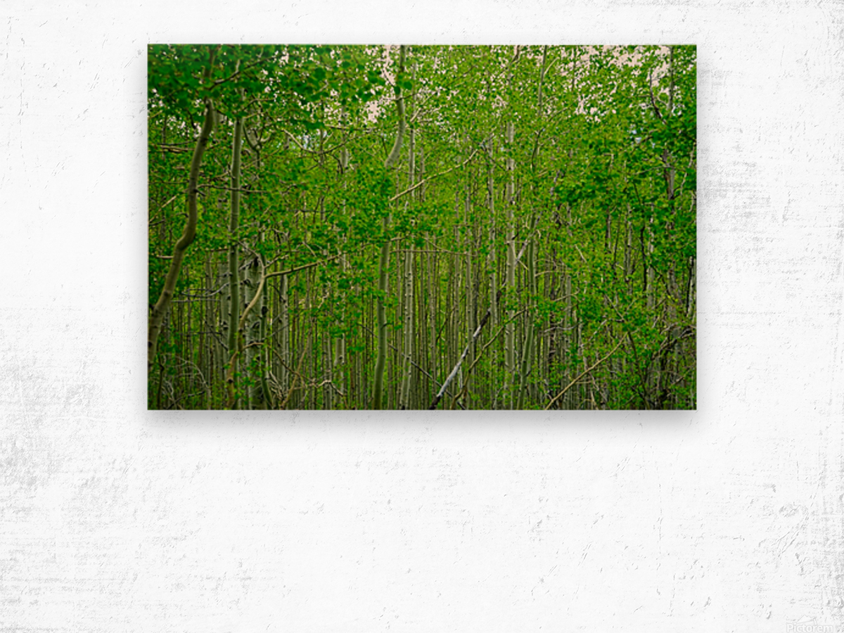 New Growth Wood print