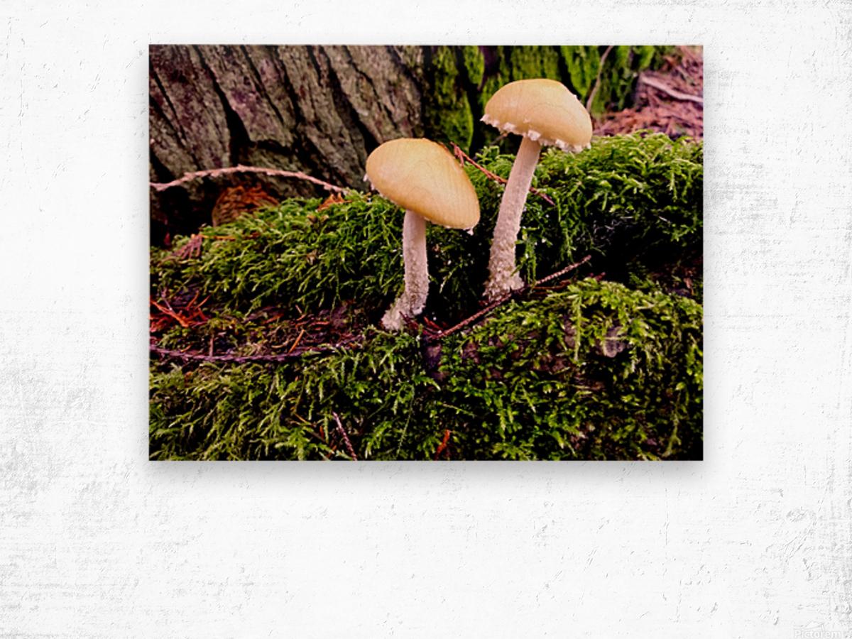Tiny World 6 of 8 Wood print