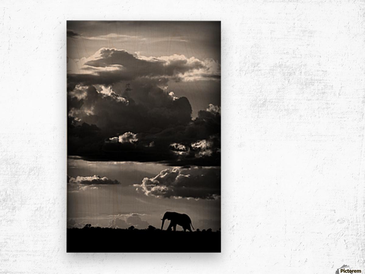 He walks under an African Sky by WildPhotoArt   Wood print