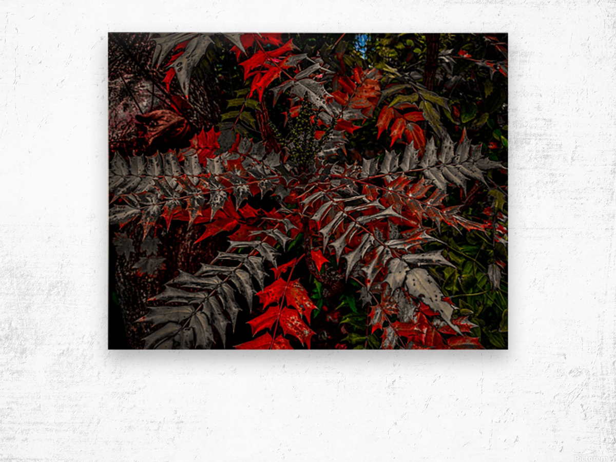 Holly Explosion Wood print