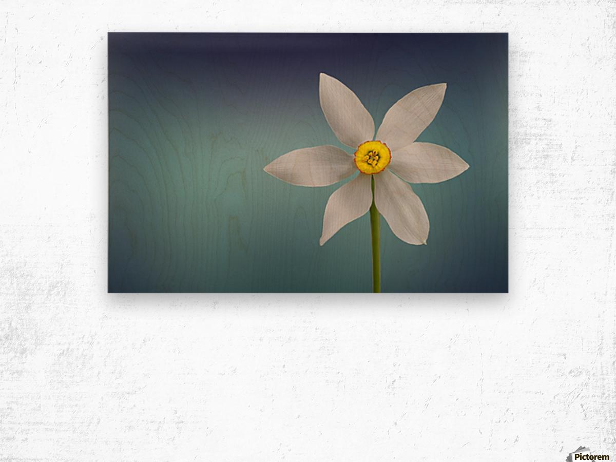 Flower of Paradise by Bess Hamiti  Wood print