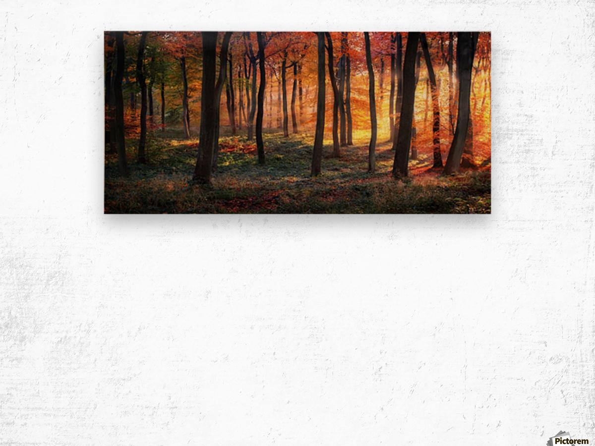 Autumn Woodland Sunrise Wood print