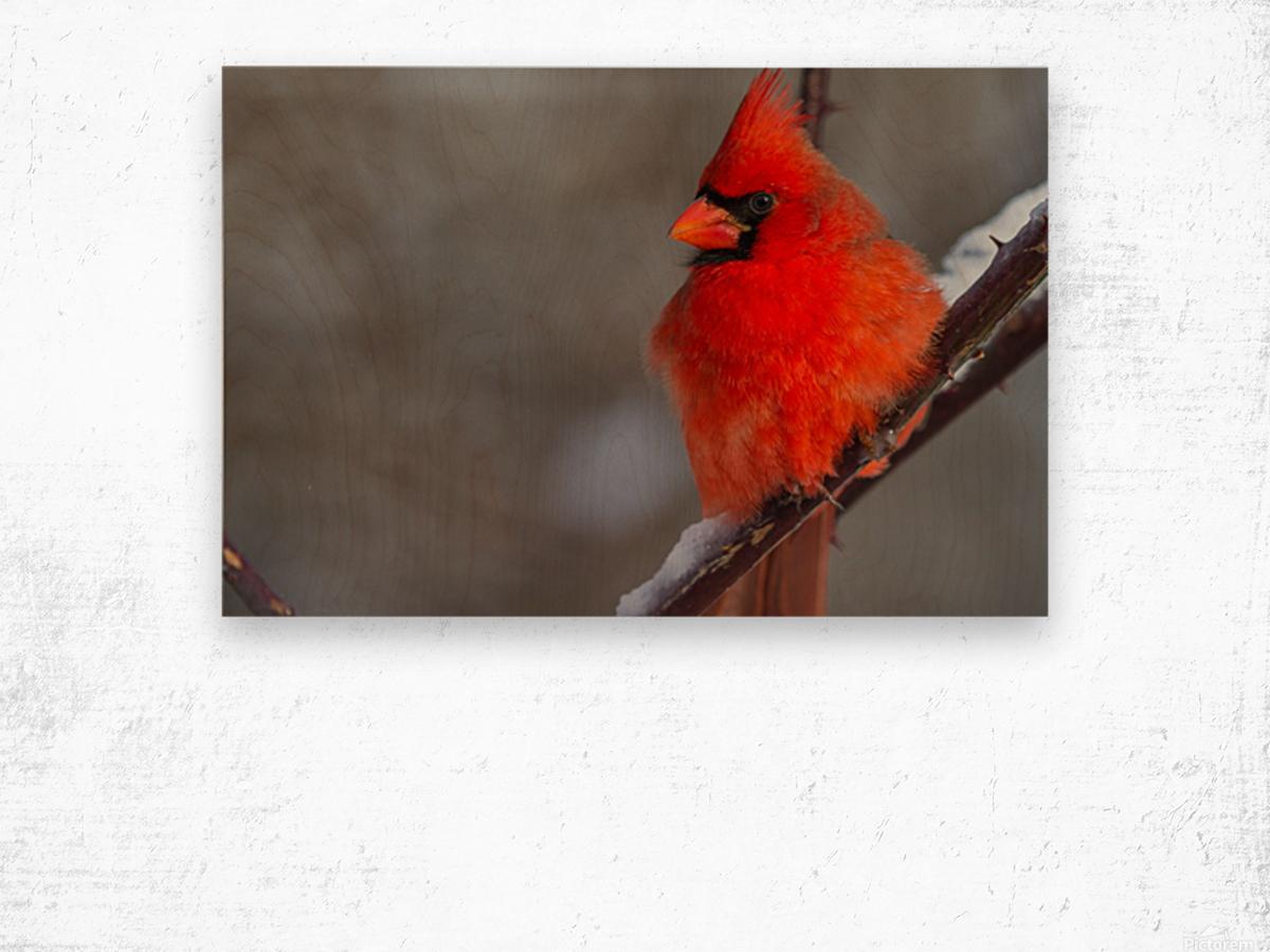 Cardinal ap 1866 Wood print