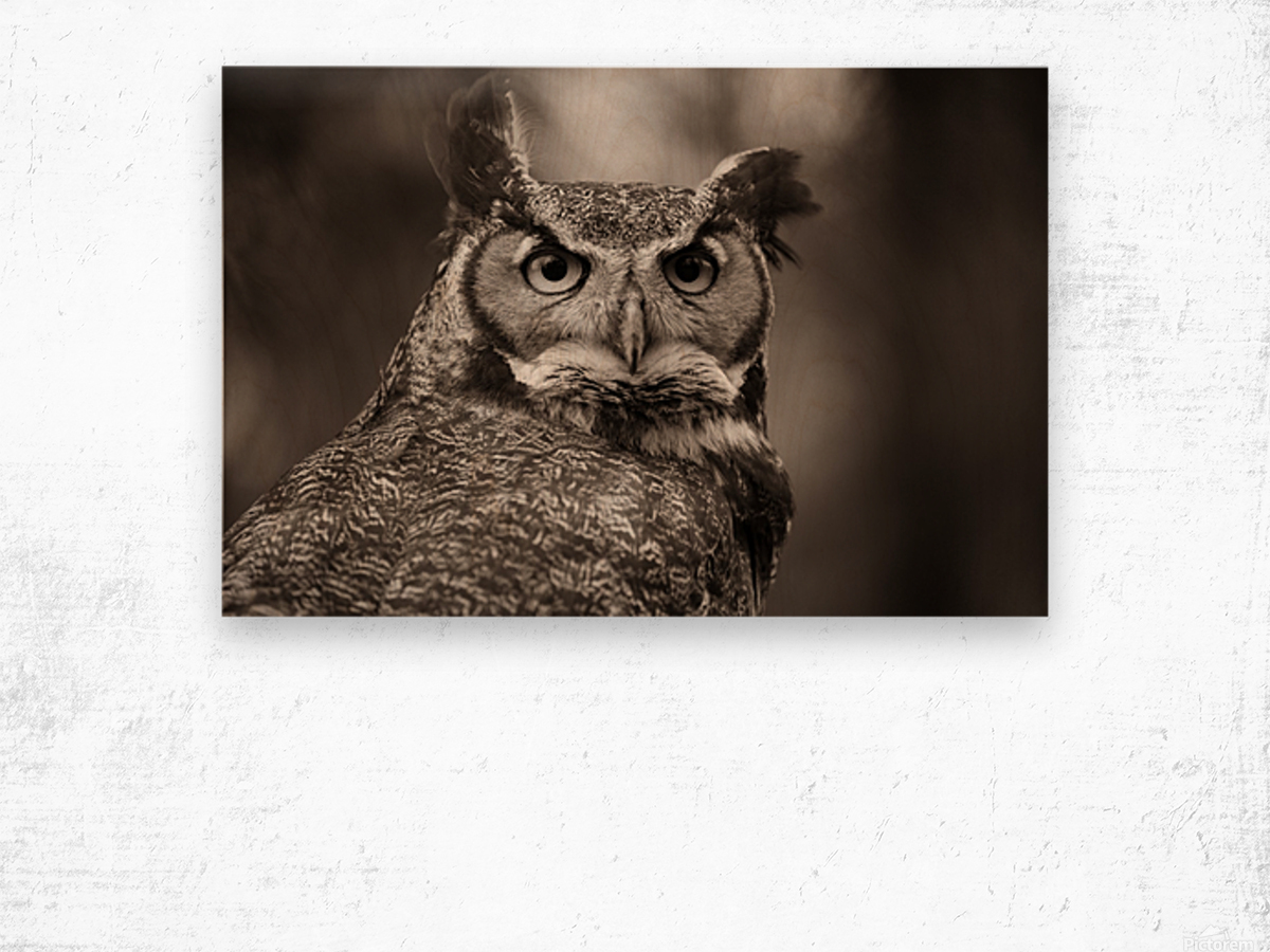Great Horned Owl ap 2860 B&W Wood print