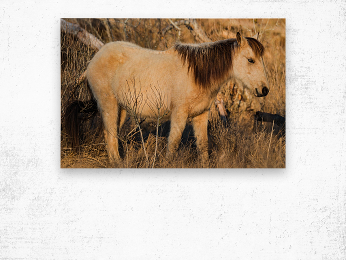 Wild Horse ap 2740 Wood print