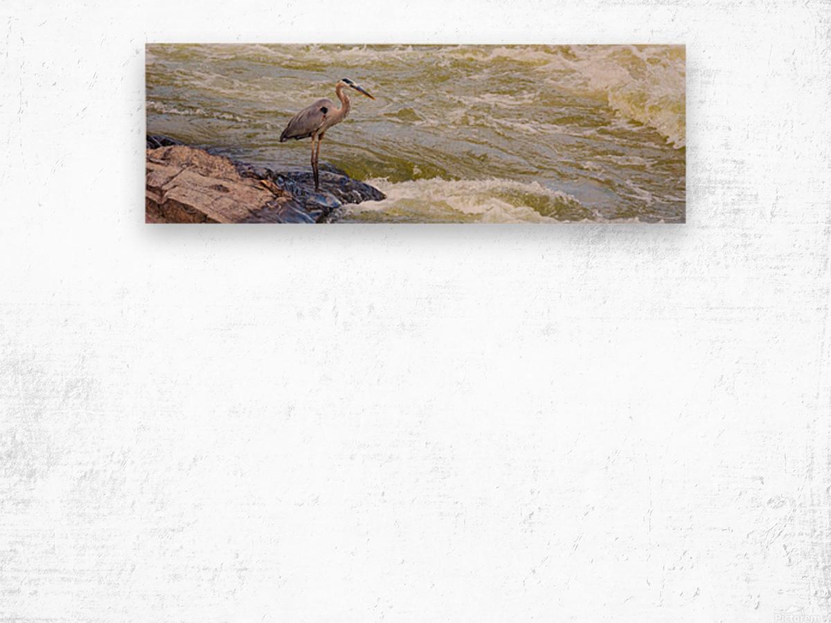 Great Blue Heron ap 2014 Impression sur bois