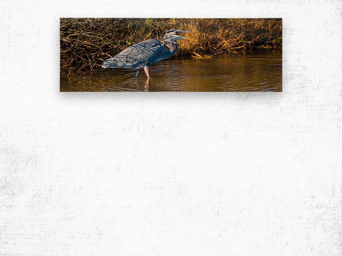 Great Blue Heron ap 2133 Wood print
