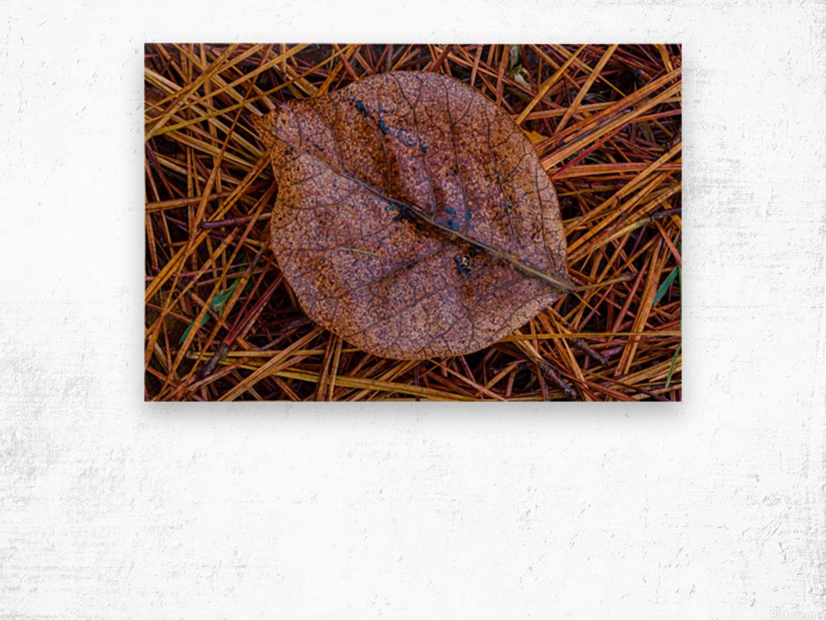 Leaf ap 1838 Wood print