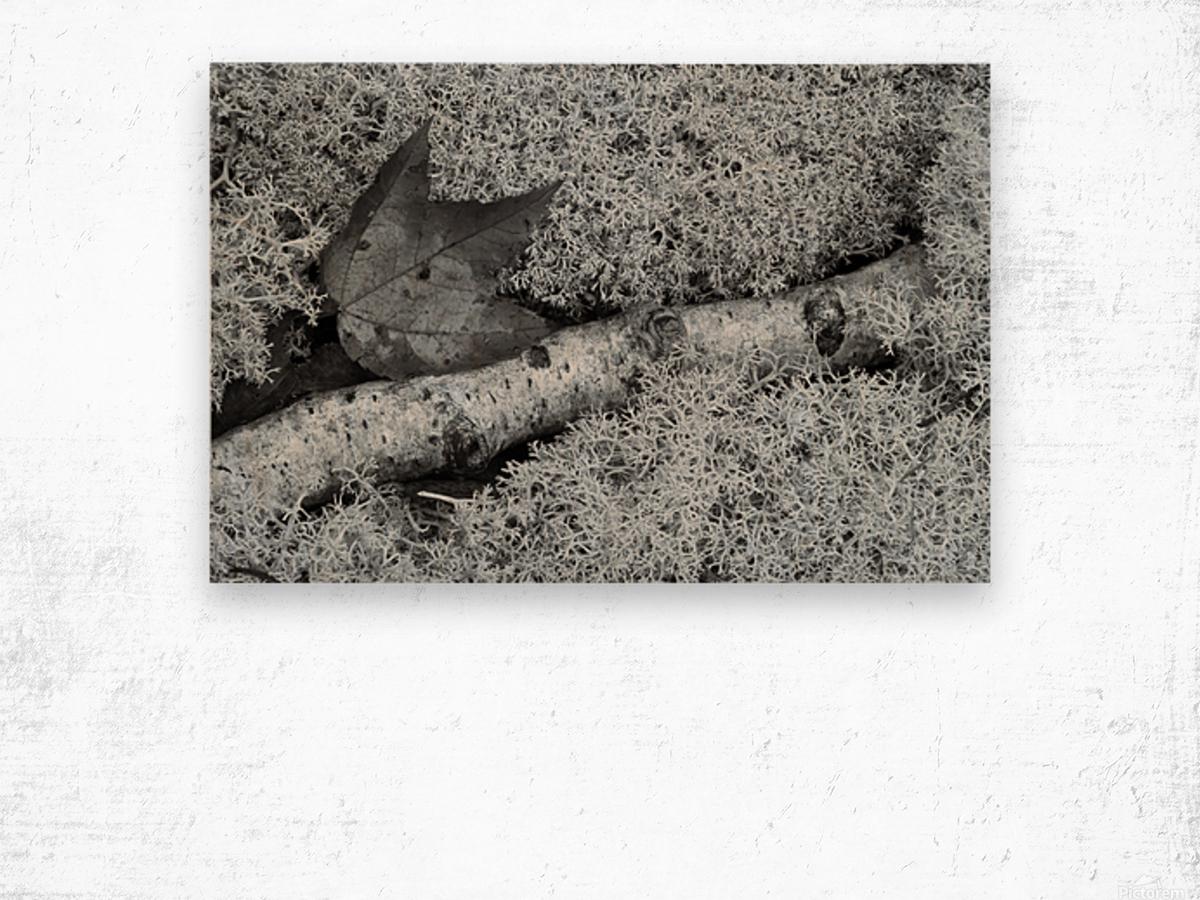 Maple Leaf ap 1554 B&W Wood print