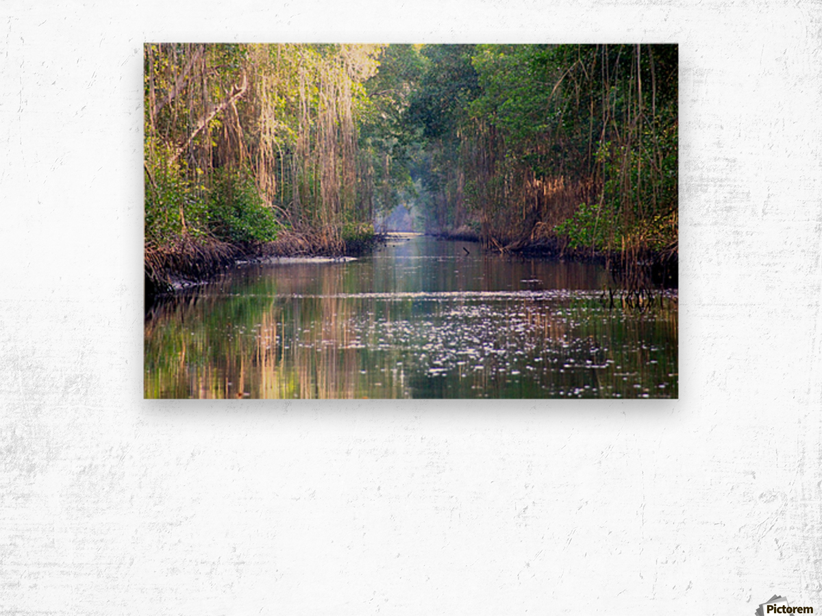 Caroni Swamp   Trinidad Wood print