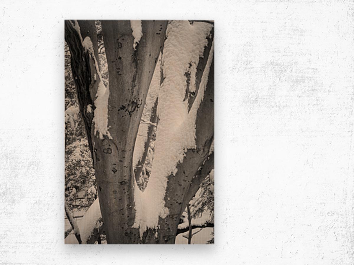 Beech ap 2044 B&W Wood print