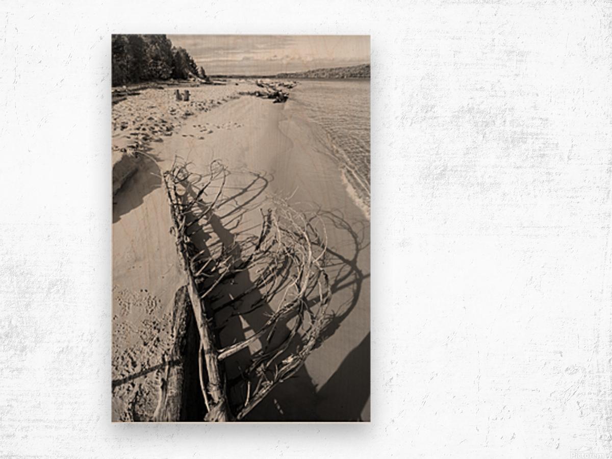 Driftwood ap 2482 B&W Wood print