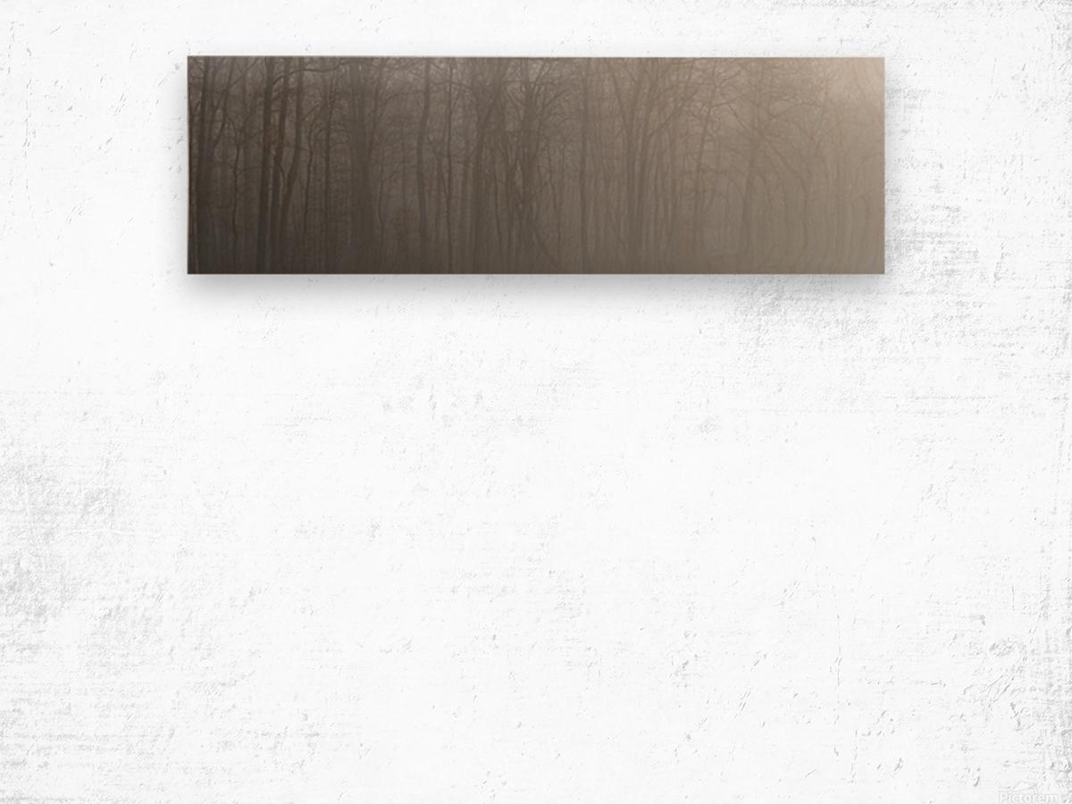 Treeline apmi 1546 Wood print