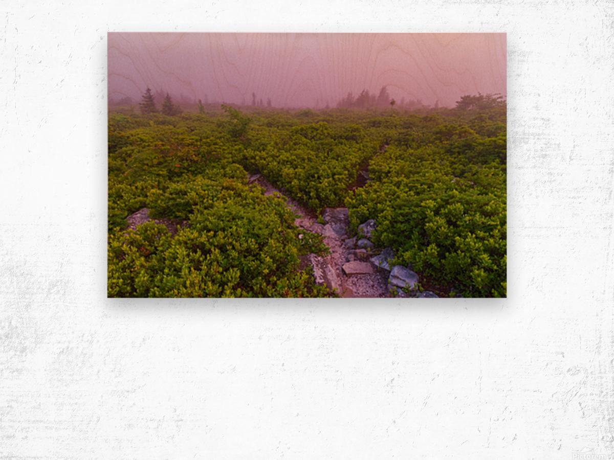 Blueberries ap 1900 Wood print