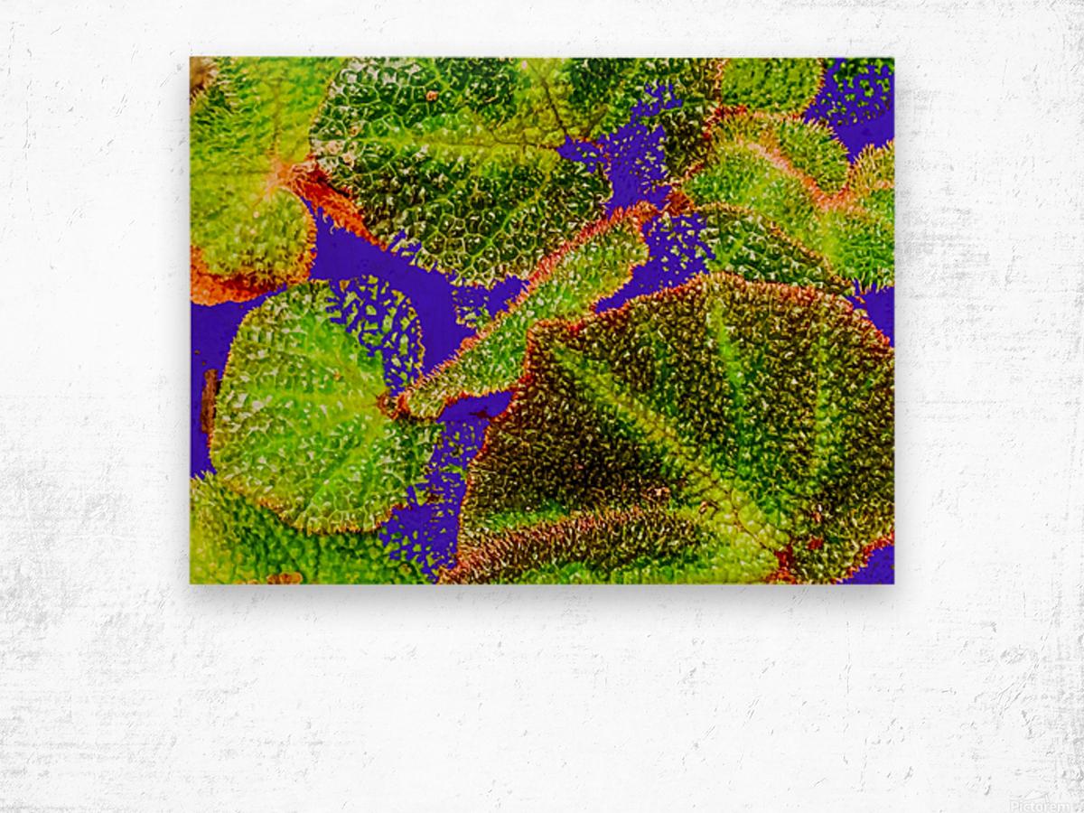 Tropical Colours Wood print