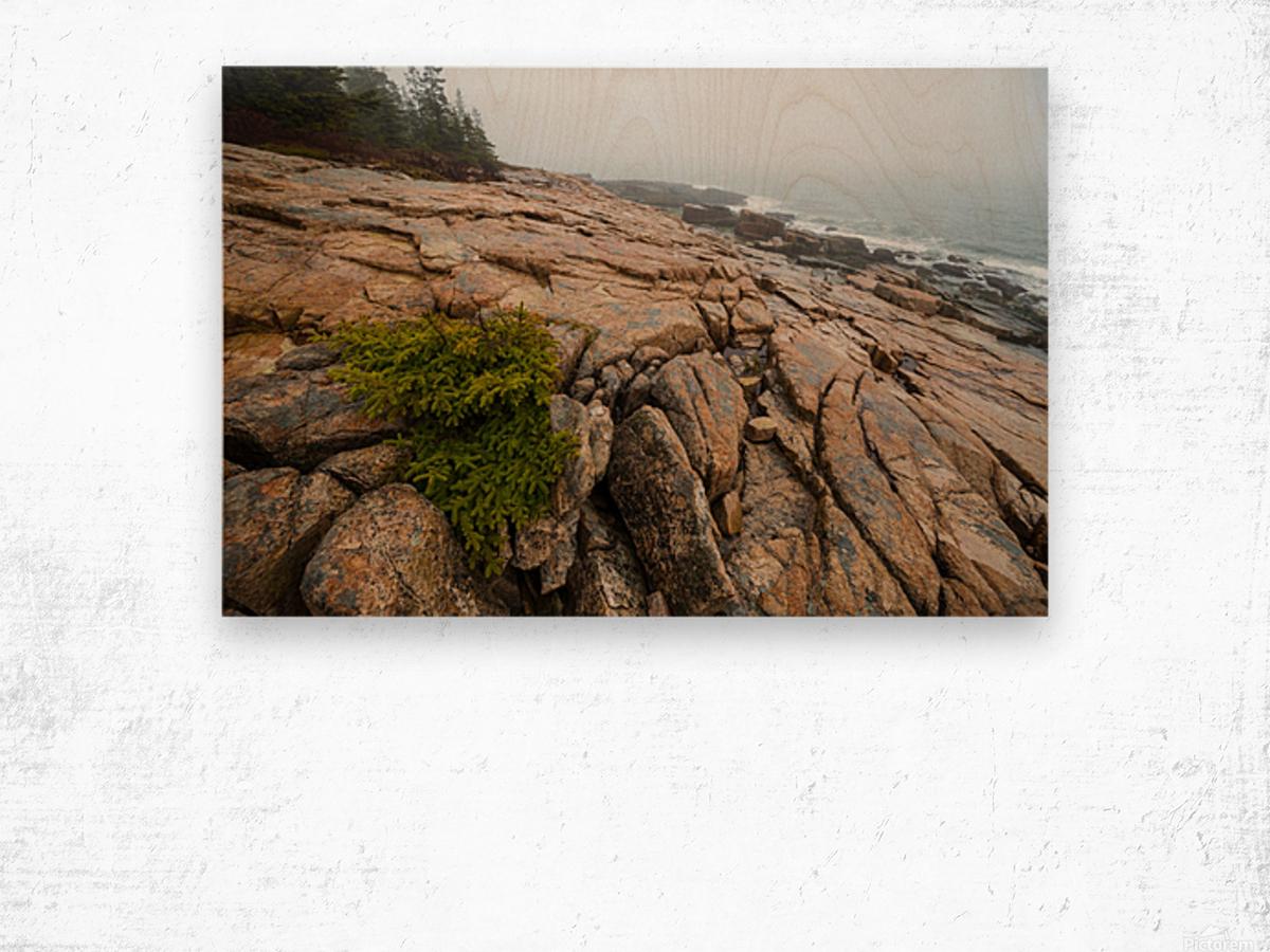 Lone Pine ap 2286 Wood print