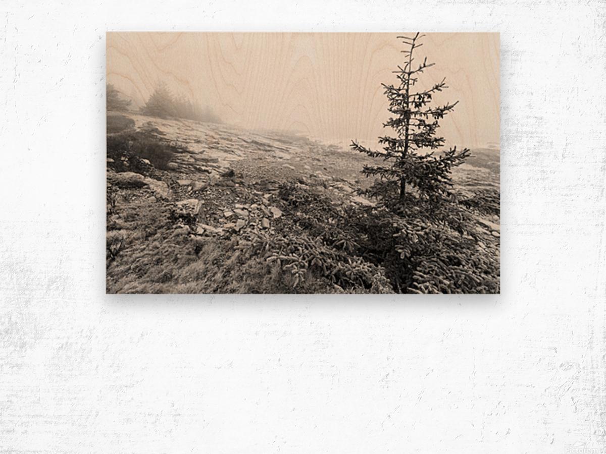 Lone Pine ap 2284 B&W Wood print