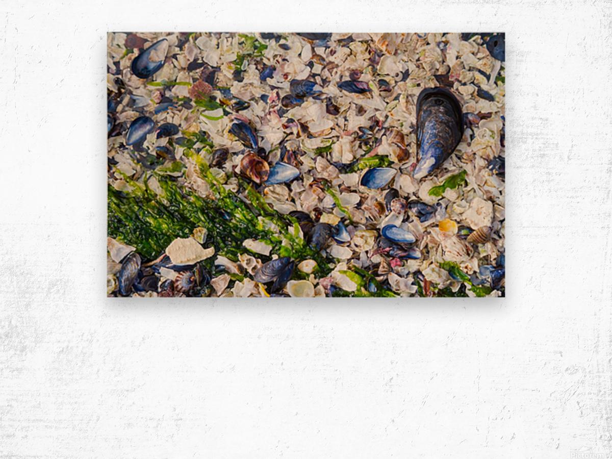 Barnacle Shells ap 1528 Wood print