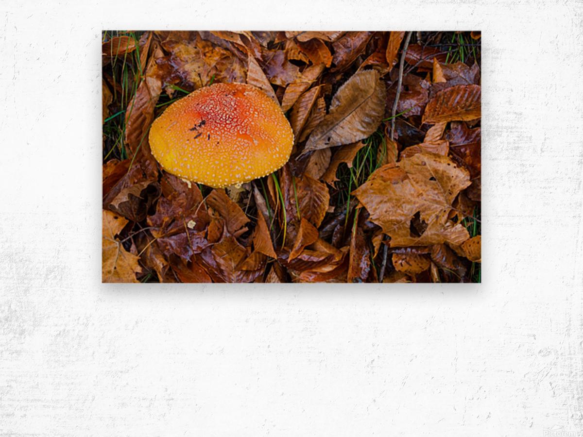 Mushroom ap 1579 Wood print