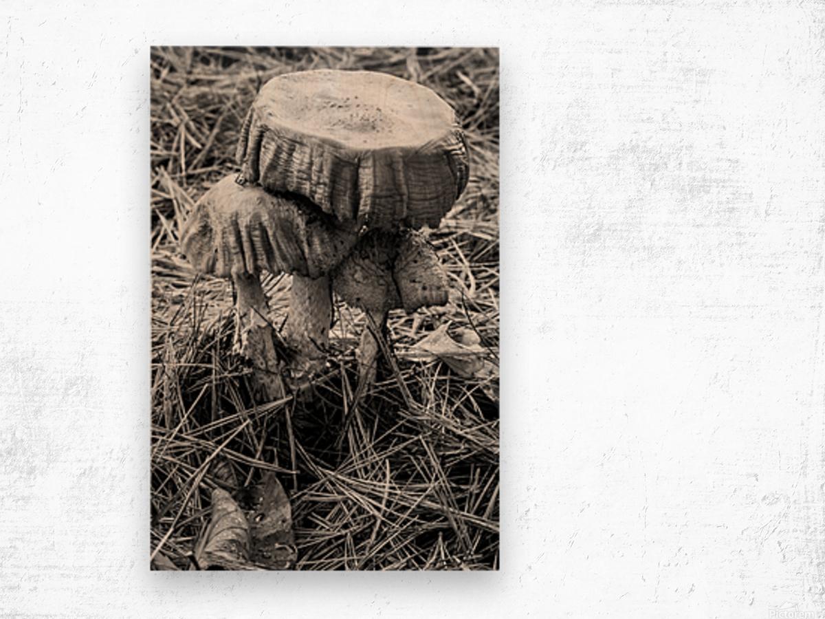 Mushrooms ap 1558 B&W Wood print