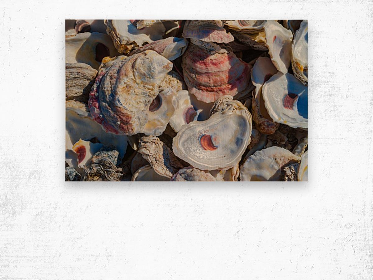 Shells ap 1747 Wood print