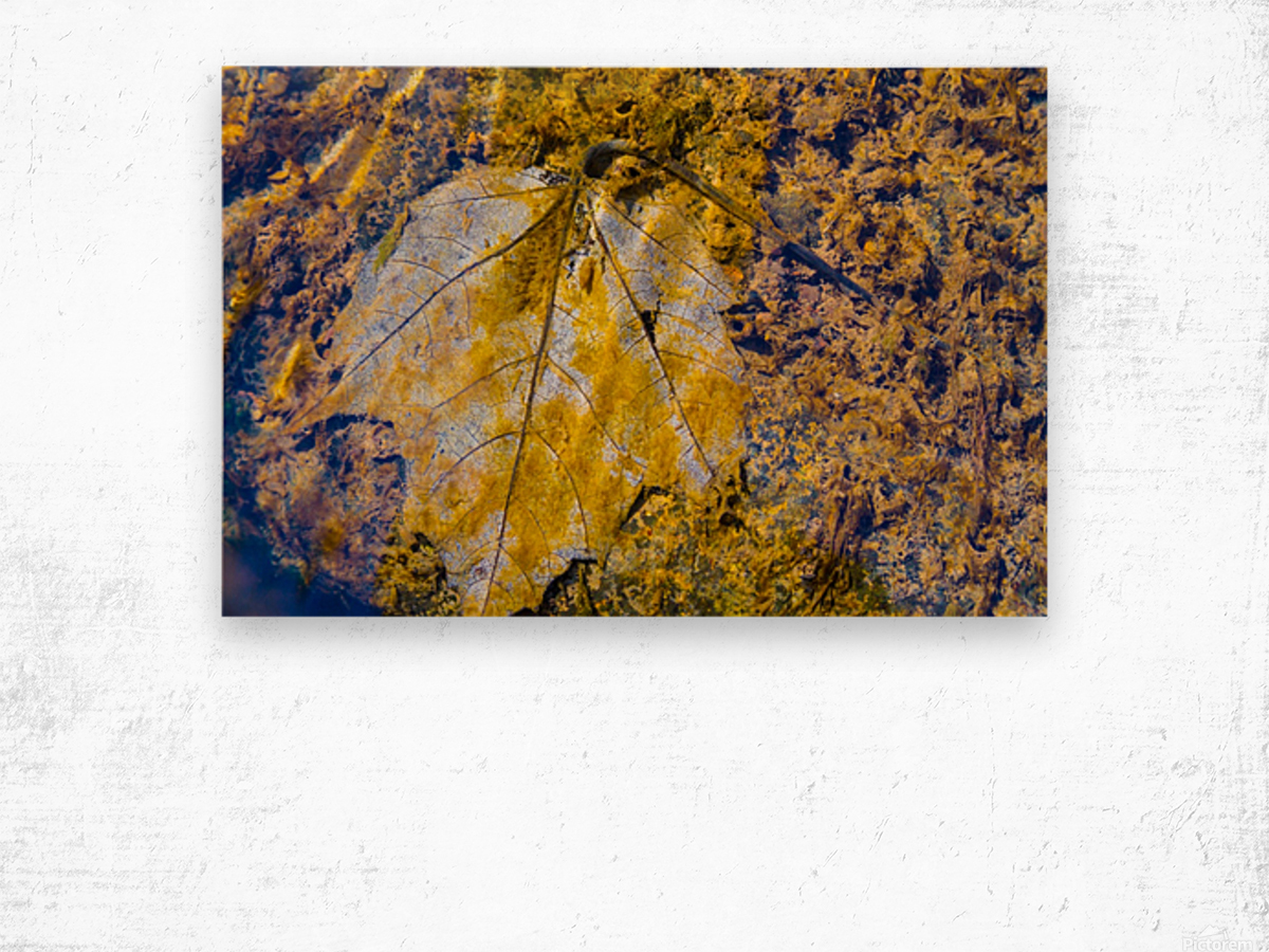 Water Colors ap 1590 Wood print