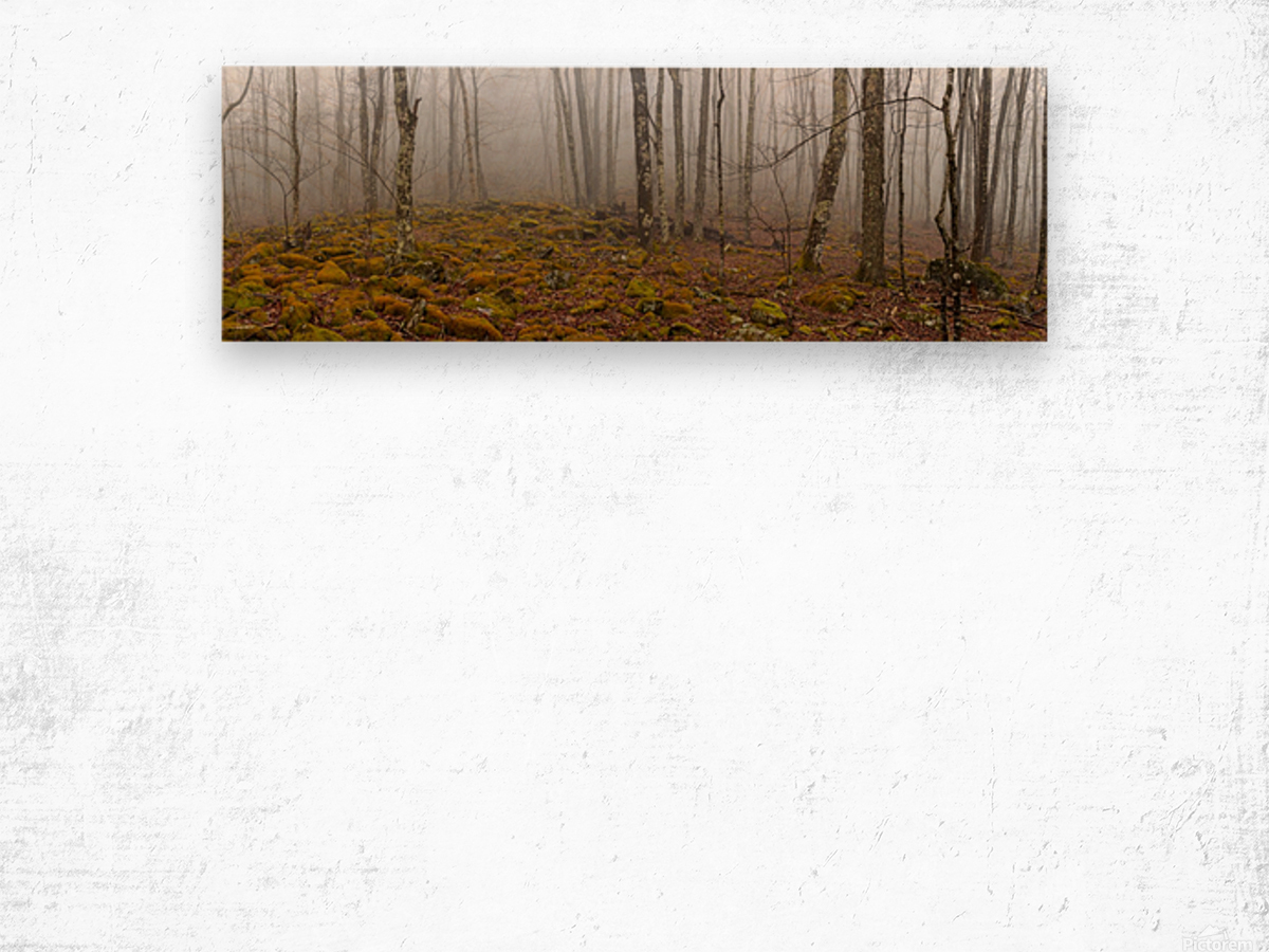 Mystic Forest apmi 1620 Wood print