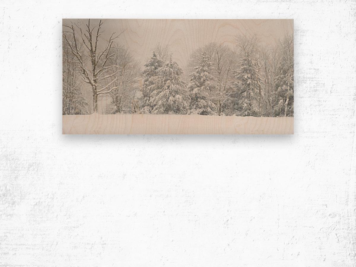Treeline apmi 1569 Wood print