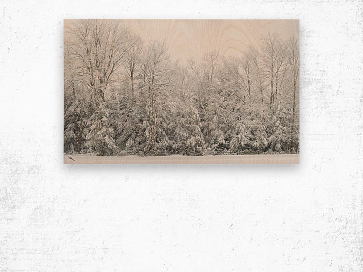 Treeline apmi 1573 Wood print